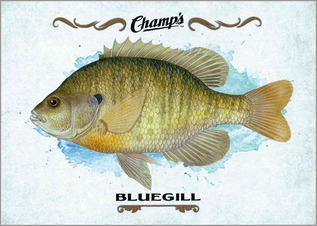 2015-16_champs_bluegill