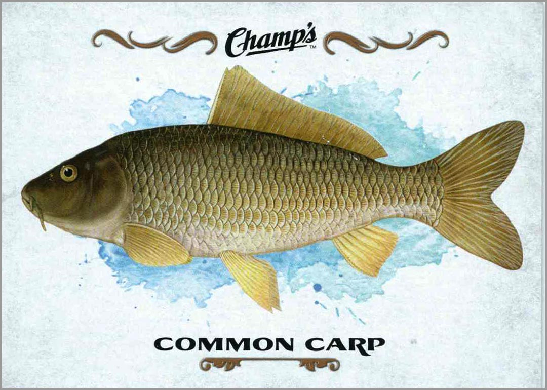 2015-16_champs_common_carp